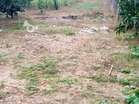 زمین 400متری مسکونی روستا واسکس در گروه خرید و فروش املاک در مازندران در شیپور-عکس15