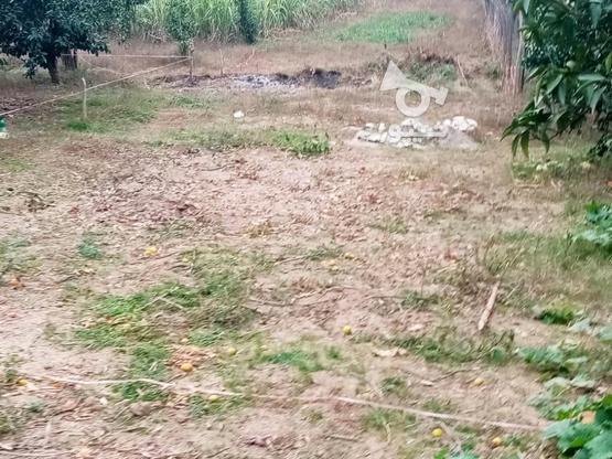 زمین 400متری مسکونی روستا واسکس در گروه خرید و فروش املاک در مازندران در شیپور-عکس9