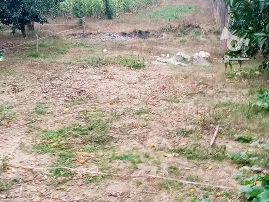 زمین 400متری مسکونی روستا واسکس در گروه خرید و فروش املاک در مازندران در شیپور-عکس12