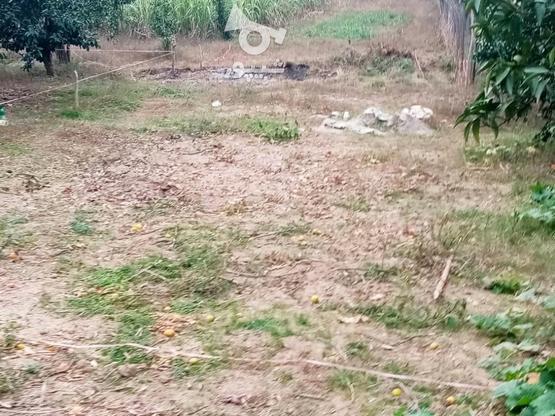 زمین 400متری مسکونی روستا واسکس در گروه خرید و فروش املاک در مازندران در شیپور-عکس13