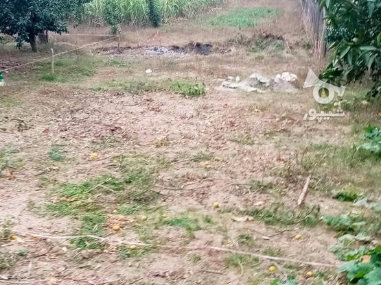 زمین 400متری مسکونی روستا واسکس در گروه خرید و فروش املاک در مازندران در شیپور-عکس6
