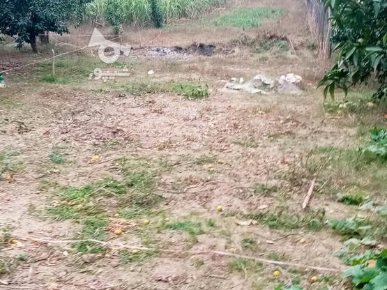 زمین 400متری مسکونی روستا واسکس در گروه خرید و فروش املاک در مازندران در شیپور-عکس3