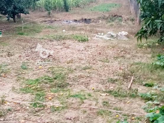 زمین 400متری مسکونی روستا واسکس در گروه خرید و فروش املاک در مازندران در شیپور-عکس1