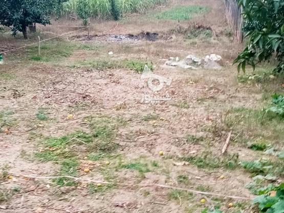 زمین 400متری مسکونی روستا واسکس در گروه خرید و فروش املاک در مازندران در شیپور-عکس5