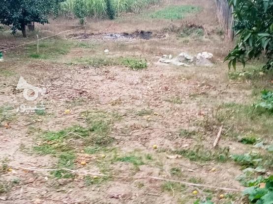 زمین 400متری مسکونی روستا واسکس در گروه خرید و فروش املاک در مازندران در شیپور-عکس7