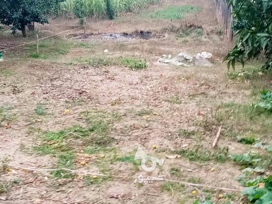 زمین 400متری مسکونی روستا واسکس در گروه خرید و فروش املاک در مازندران در شیپور-عکس8