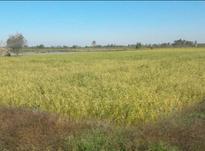 فروش زمین کشاورزی 15000 متر در آمل در شیپور-عکس کوچک