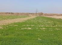 فروش فوری زمین کشاورزی یک هکتاری در امل در شیپور-عکس کوچک