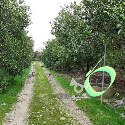 فروش زمین باغ مرکبا ت 20000 دراز محله جاده دریا در گروه خرید و فروش املاک در مازندران در شیپور-عکس7