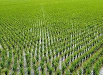 زمین کشاورزی 14000 متر در جاده واسکس آمل در شیپور-عکس کوچک
