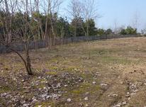 زمین مسکونی 2000 متر آمل در شیپور-عکس کوچک