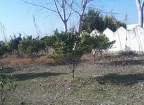 فروش زمین  300 متر آبکسر در شیپور-عکس کوچک