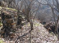 باغ واقع در روستای گردشگری خانقاه در شیپور-عکس کوچک