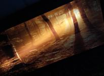 « تابلو ال ای دی طرح جنگل » در شیپور-عکس کوچک