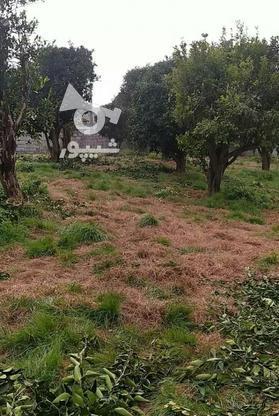 فروش زمین مسکونی 200 متر در آمل در گروه خرید و فروش املاک در مازندران در شیپور-عکس7