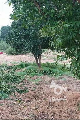 فروش زمین مسکونی 200 متر در آمل در گروه خرید و فروش املاک در مازندران در شیپور-عکس5