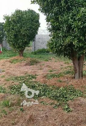 فروش زمین مسکونی 200 متر در آمل در گروه خرید و فروش املاک در مازندران در شیپور-عکس1