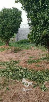 فروش زمین مسکونی 200 متر در آمل در گروه خرید و فروش املاک در مازندران در شیپور-عکس4