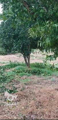 فروش زمین مسکونی 200 متر در آمل در گروه خرید و فروش املاک در مازندران در شیپور-عکس3