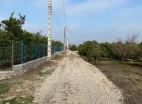 فروش زمین باغچه مرکبات 650 متری جاده گهرباران  در شیپور-عکس کوچک