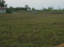 6000متر زمین چالوس در شیپور-عکس کوچک