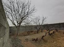 زمین و باغچه 450 متر  در شیپور-عکس کوچک