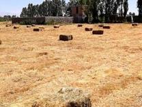 فروش زمین کشاورزی 60000 متر در اردبیل در شیپور