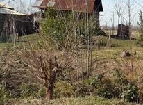 1700 متر زمین مسکونی با بنای کلنگی در سرشکه در شیپور-عکس کوچک