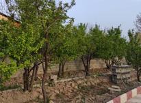 فروش باغ 2800 متر در بکه در شیپور-عکس کوچک