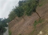 فروش باغ 1000 متر در آمل در شیپور-عکس کوچک