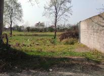 800 متر زمین مسکونی در لیالستان در شیپور-عکس کوچک