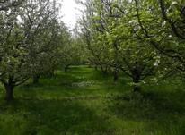 8,500 متر باغ سیب و آلو در شیپور-عکس کوچک
