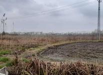 زمین های کشاورزی در عینک نخودچر در شیپور-عکس کوچک