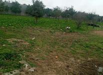 فروش فوری زمین مسکونی یک هکتاری در امل در شیپور-عکس کوچک
