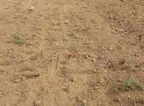 زمین مسکونی 1492 متر در تالش در شیپور-عکس کوچک