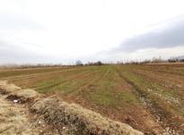زمین زراعی بحر بلوارمطهری در شیپور-عکس کوچک
