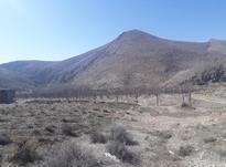 فروش زمین کشاورزی9500 متر در فیروزکوه ارجمند ، طارس در شیپور-عکس کوچک