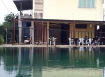فروش زمین مسکونی 20000 متر در بابل در شیپور-عکس کوچک