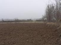 فروش زمین کشاورزی 3450 متر در صومعه سرا در شیپور-عکس کوچک