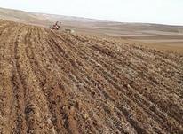 زمین کشاورزی دیم بیله سوار روستای فولادلو  در شیپور-عکس کوچک