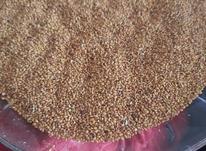 بذر یونجه عالییی در شیپور-عکس کوچک