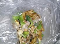 بذر نشایی کدو تنبل در شیپور-عکس کوچک