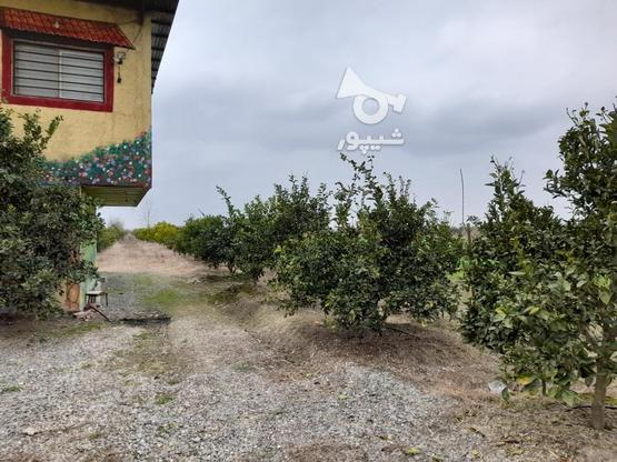خونه باغ زیبا در بهترین نقطه جویبار در گروه خرید و فروش املاک در مازندران در شیپور-عکس8