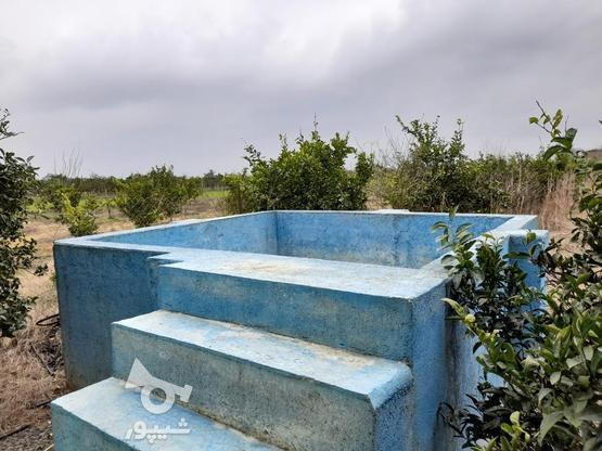 خونه باغ زیبا در بهترین نقطه جویبار در گروه خرید و فروش املاک در مازندران در شیپور-عکس5