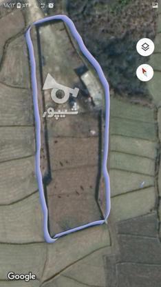 زمین کشاورزی بهر اصلی کمربندی  در گروه خرید و فروش املاک در مازندران در شیپور-عکس1