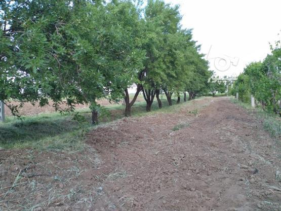 باغ انگور و بادام در گروه خرید و فروش املاک در قزوین در شیپور-عکس2