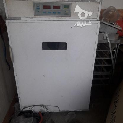 دستگاه جوجه کشی  در گروه خرید و فروش صنعتی، اداری و تجاری در اصفهان در شیپور-عکس2