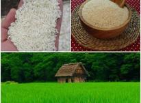 حکیم برنج شمال در شیپور-عکس کوچک