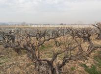 باغچه و زمین 960 متر در رباط کریم در شیپور-عکس کوچک