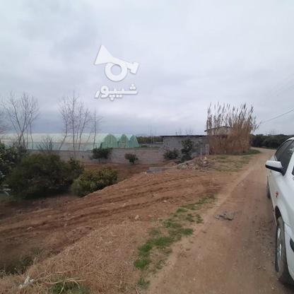 زمین باغی   1400متر  در گروه خرید و فروش املاک در مازندران در شیپور-عکس4